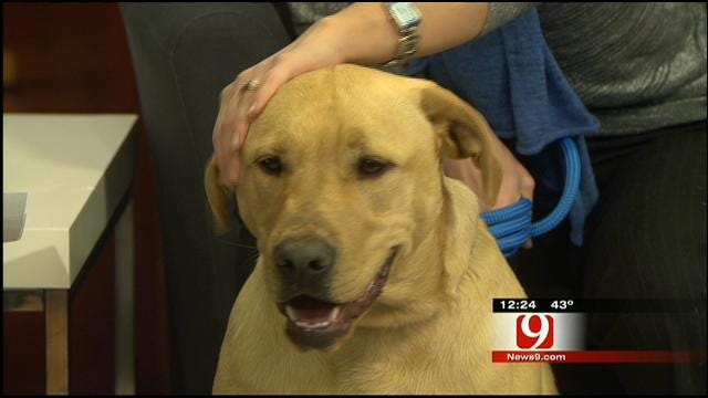 Pet Of The Week: Meet Rufus