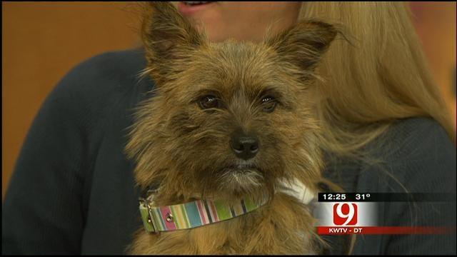 Pet Of The Week: Meet Zoey
