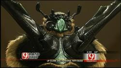 See Bugs Up Close At Sam Noble Museum