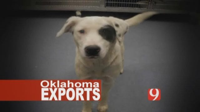 One Of Oklahoma's Exports – Unwanted Pets