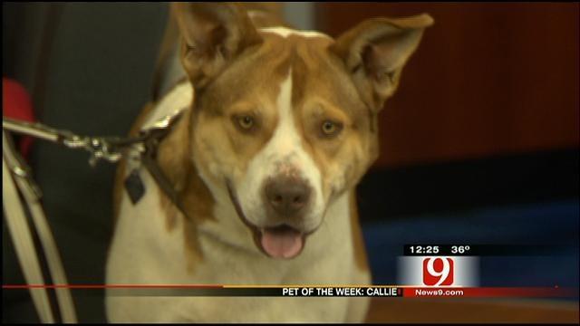 Pet Of The Week: Meet Callie
