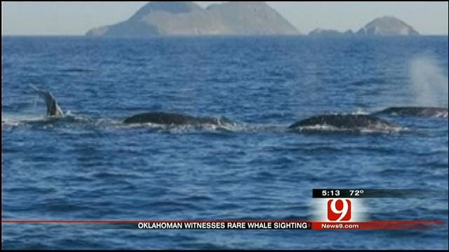 OKC Couple Shares 'Whale Of A Tale' From California Vacation