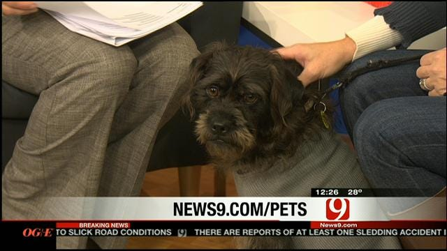Pet Of The Week: Meet Griswald