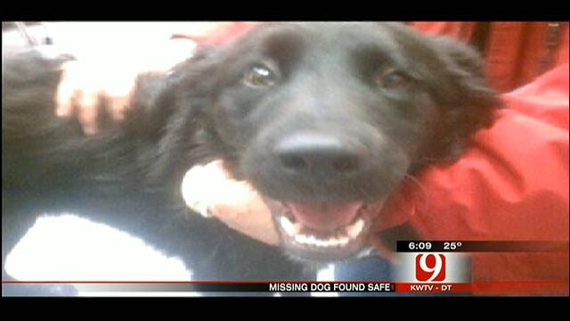 New Mexico Couple Safely Locates Missing Dog