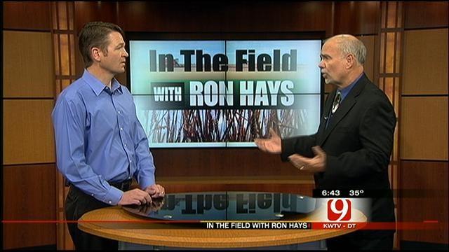 In The Field: 2013 Wheat Crop