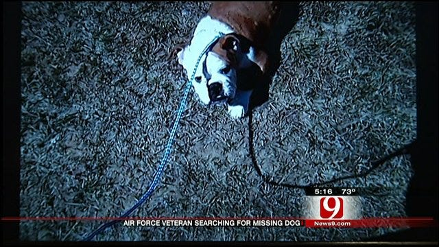 Alabama Family Desperate To Find Bulldog That Went Missing In Oklahoma