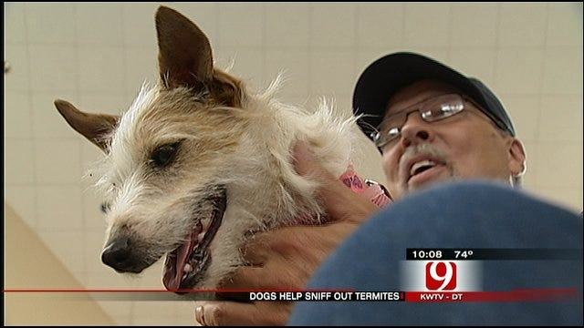 Termite-Sniffing Pooch Assists Local Exterminator