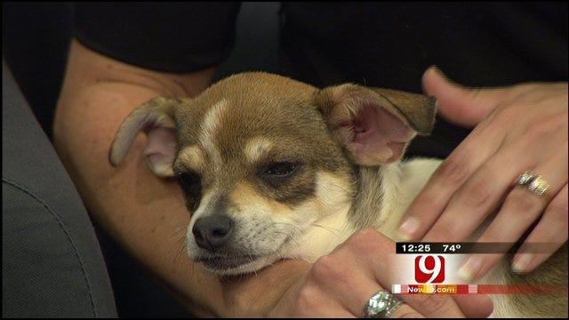 Pet Of The Week: Meet Ollie