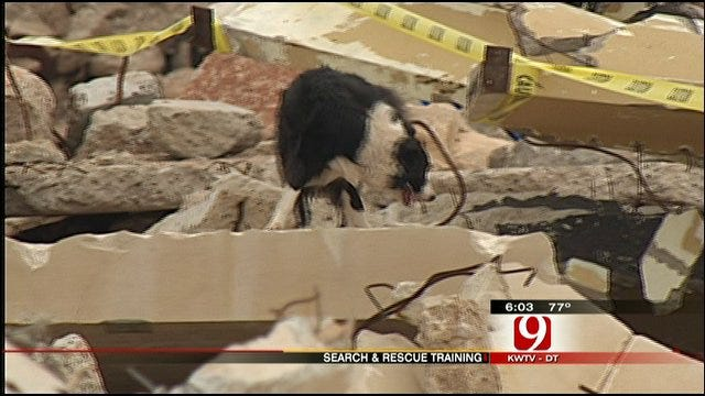 Rescue Dogs Put To The Test In OKC