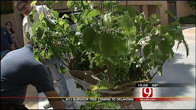 9/11, Oklahoma Bombing Survivor Trees To Be Planted Side By Side