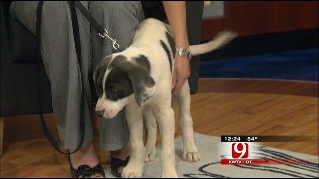 Pet Of The Week: Meet Blue Bell
