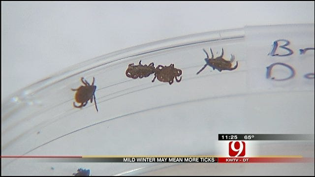 Experts Warn Of Early Tick Season In Oklahoma