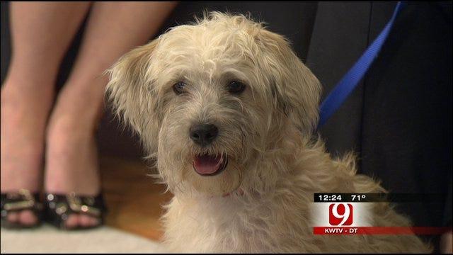 Pet Of The Week: Meet Oliver