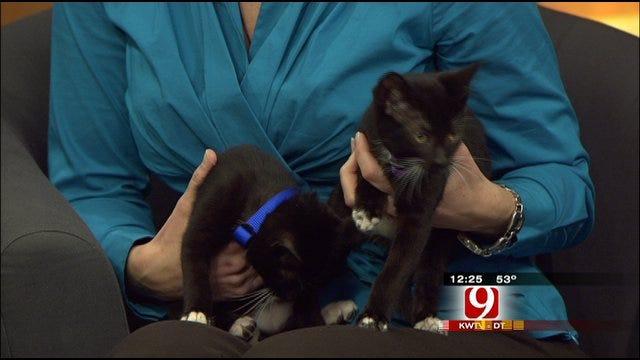 Pet Of The Week: Meet Jasper and Cammie