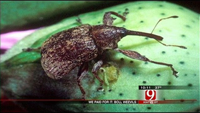 We Paid For It: Boll Weevil Eradication Organization
