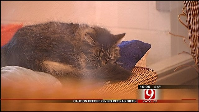Cuddly Valentine Gifts Adopted From Shelters