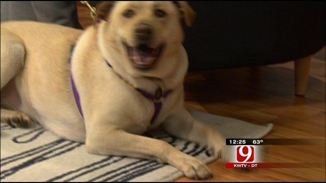 Pet Of The Week: Meet Maggie