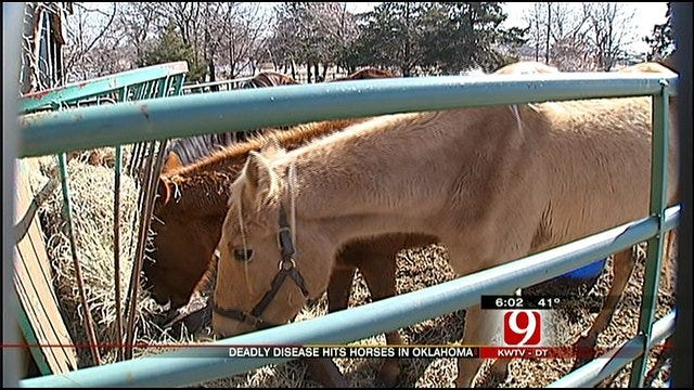 Drought Distemper On The Rise In Oklahoma Horses