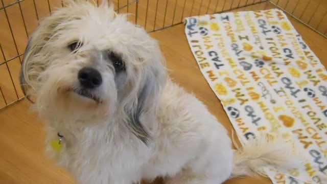 Pet Of The Week: Meet Newman