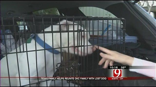 Dog Makes 350-Mile Trip Home For Christmas