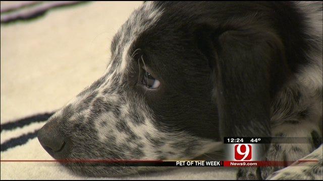Pet Of The Week: Meet Frankie