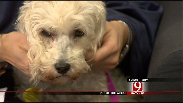 Pet Of The Week: Meet Millie