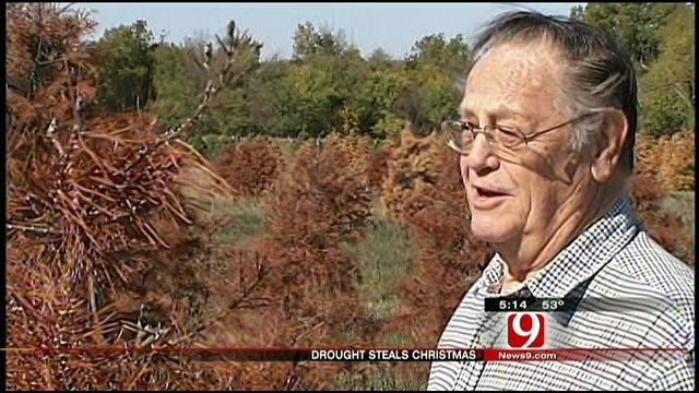 Drought Kills Christmas For Purcell Farmer