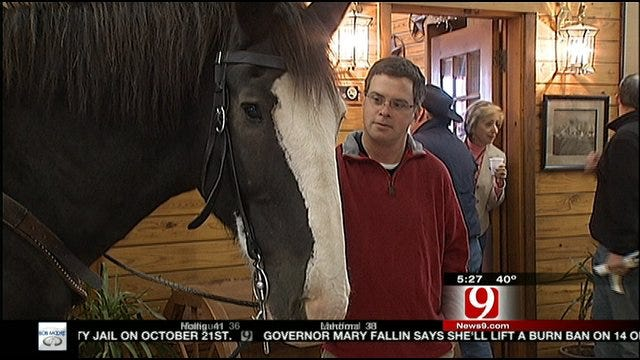 News 9 This Morning Learns More About Clydesdales During Road Trip Oklahoma