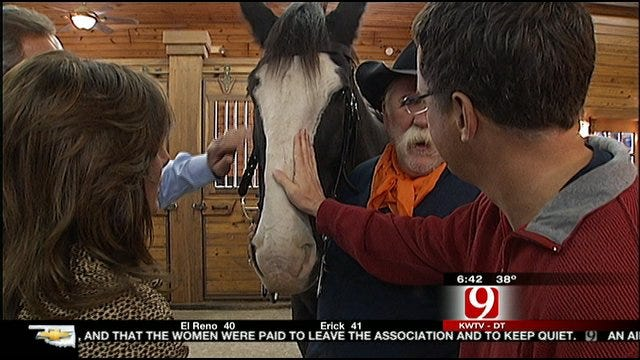 News 9 This Morning At Express Clydesdales Barn In Yukon