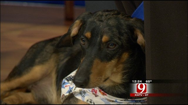 Pet Of The Week: Meet Jasper