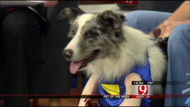 Pet Of The Week: Meet Slater