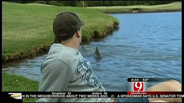 Sharks On Golf Course
