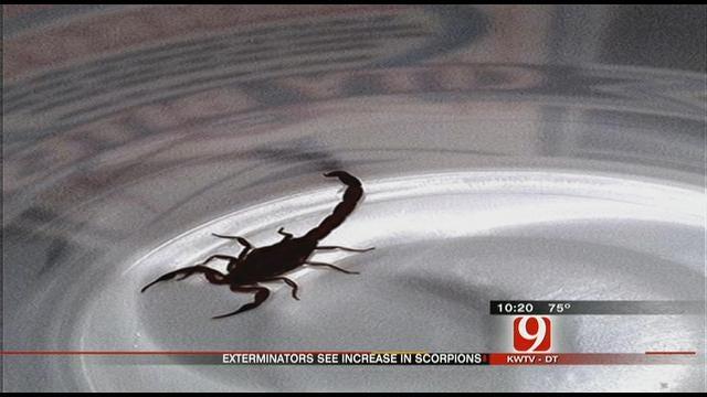 Scorpions Invade Central Oklahoma