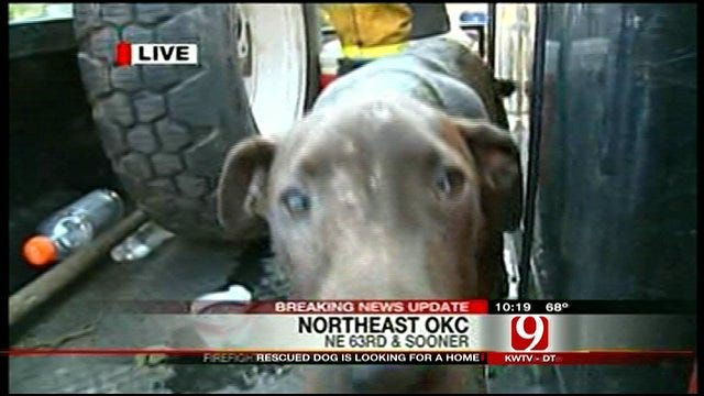Dog Rescued In OKC Wildfires Still Needs Forever Home