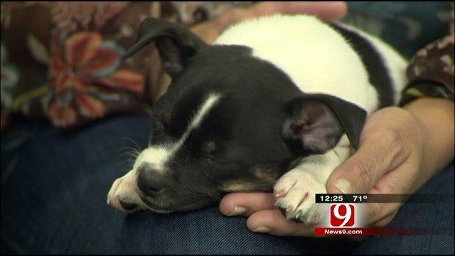 Pet Of The Week: Meet Tatum