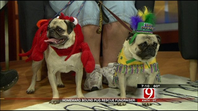 News 9 Talks To Local Pug Rescue Group