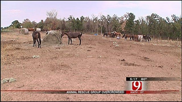 Hay Shortage Taxes Jones Animal Rescue Facility
