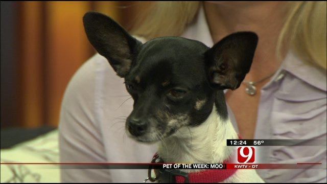 Pet Of The Week: Meet Moo