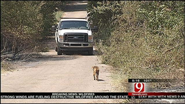 Animal Owners Search For Pets After Wildfire