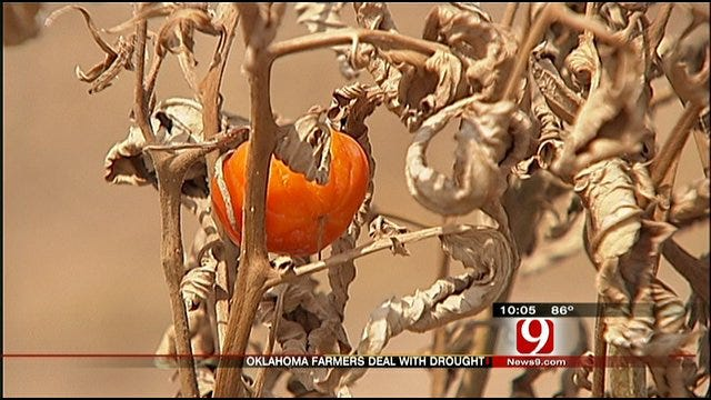 Farmers Learn To Live With Drought