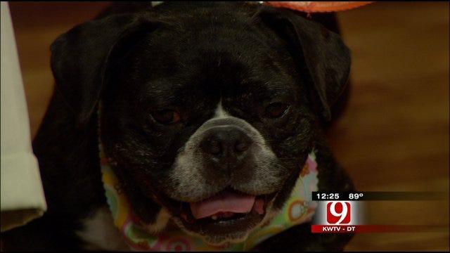 Pet Of The Week: Meet Izzy