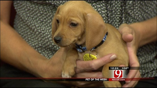 Pet Of The Week: Meet Frankie