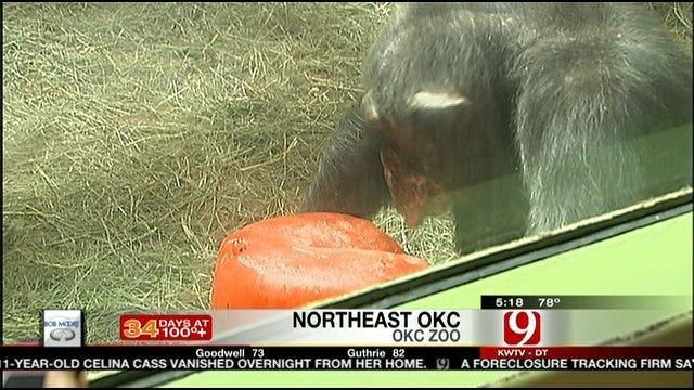 Treats Help OKC Zoo Animals Stay Cool