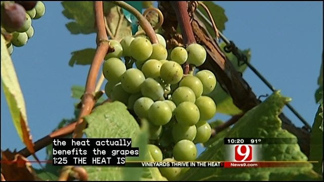 Heat Helps Oklahoma Vineyards Harvest Sweeter Grapes