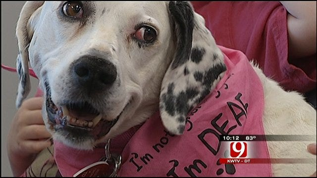 Service Dog Of The Year Named In Blanchard