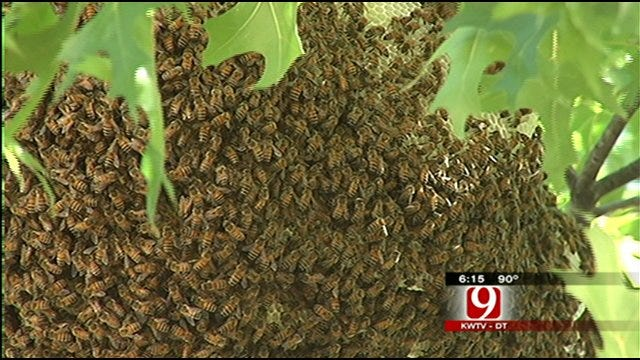 Large Swarm Of Bees Find New Home In Northwest OKC Neighborhood