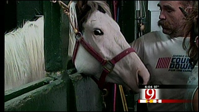 Shawnee Man Arrested For Starving Horses