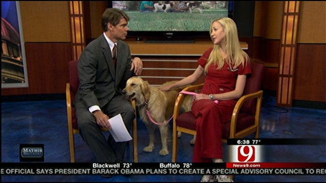 Keeping Pets Safe From The Heat