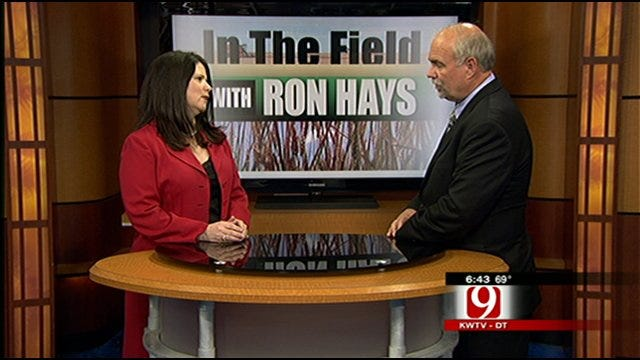 In The Field: Oklahoma's Cattle Industry And A New Report