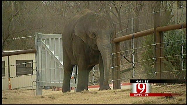 Oklahoma City Zoo On Alert For Asha The Elephant's Big Delivery